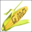 1GM Corn